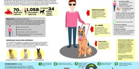 Infografia: perros lazarillo